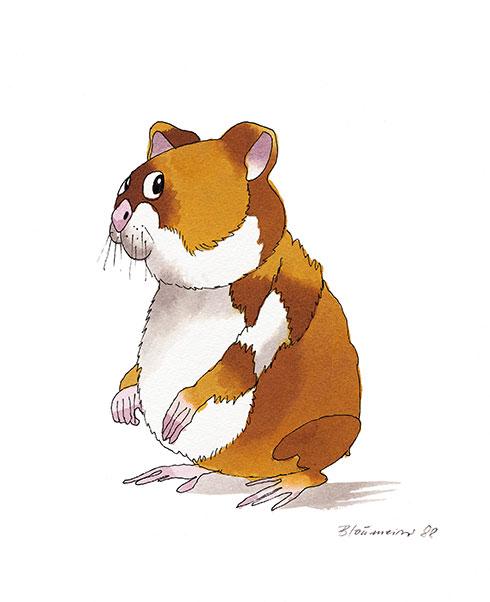 Hamster schaut dich an